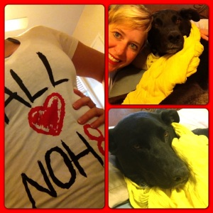 Riggins doesn't have a No H8 t-shirt so he is wearing a beautiful yellow ascot in support.
