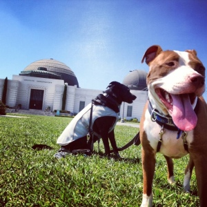 Riggins and Kona pose in front of the Observatory.