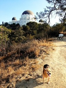 Shug makes her way up the path to the observatory in Griffith Park.