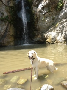 Clover loves the waterfall at Eaton Canyon.