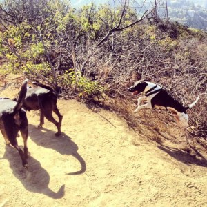 Lousy leaps for joy at Runyon