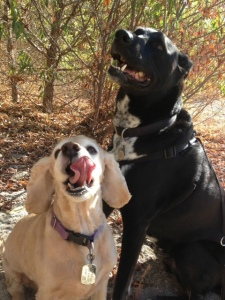 Dexter and Riggins ham it up for the camera at Hahamongna Watershed Park.