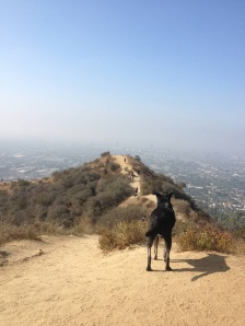 Riggins look over the spine at Runyon