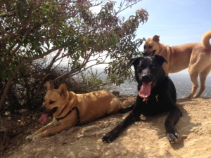 Bear, Huxley & Jax seek shade on Runyon