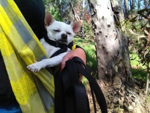 Fredo is the king of chilax hiking!