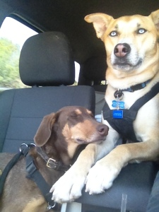 These two get buckled to the backseat now.